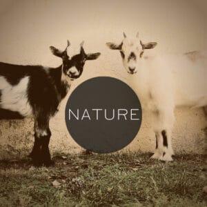 Nature 記事